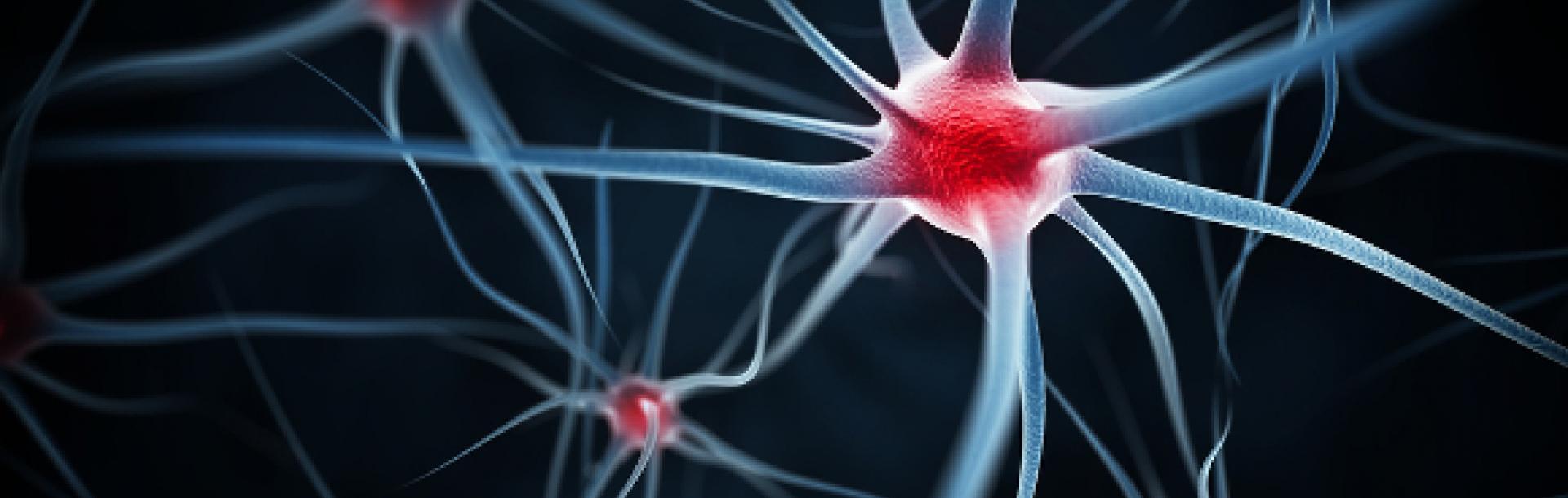 בדיקות מעבדה בעזרת רשת נוירונים ללימוד עמוק בפחות זמן וכסף