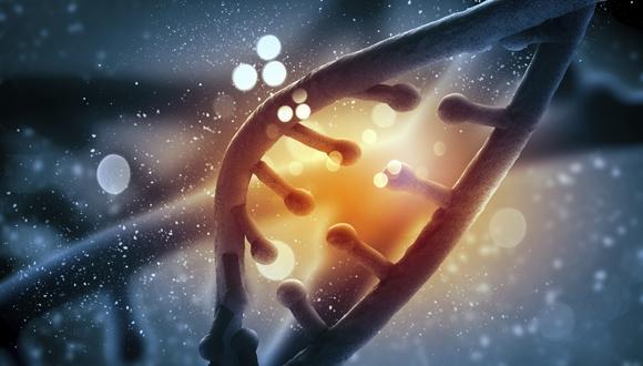 חוקרים גילו עקרונות אוניברסאליים העומדים בבסיס הארגון הגנומי